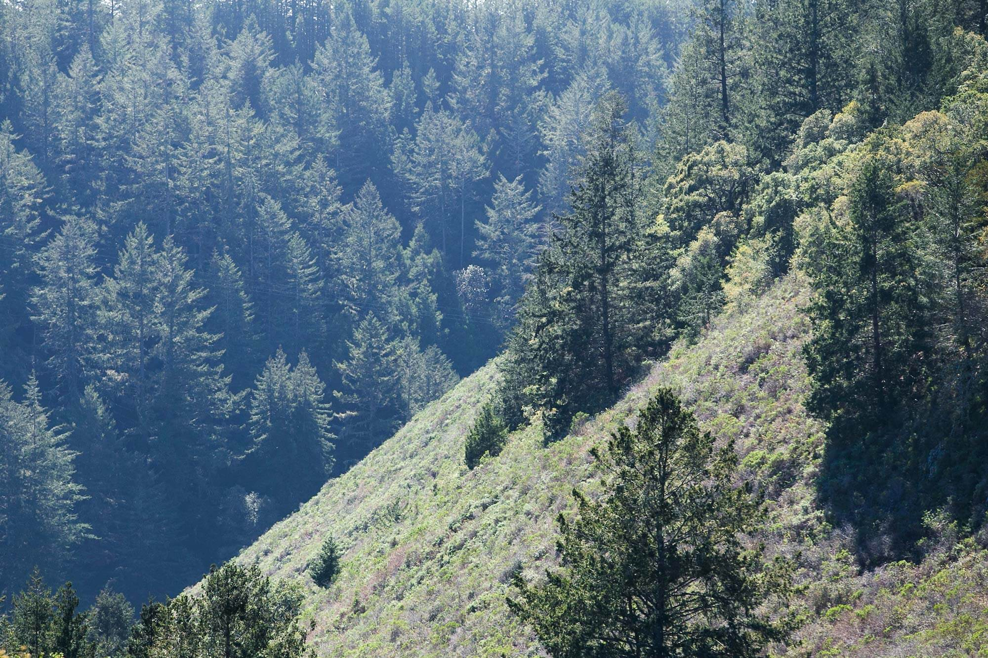 Hillside and redwood trees in San Vicente Redwoods