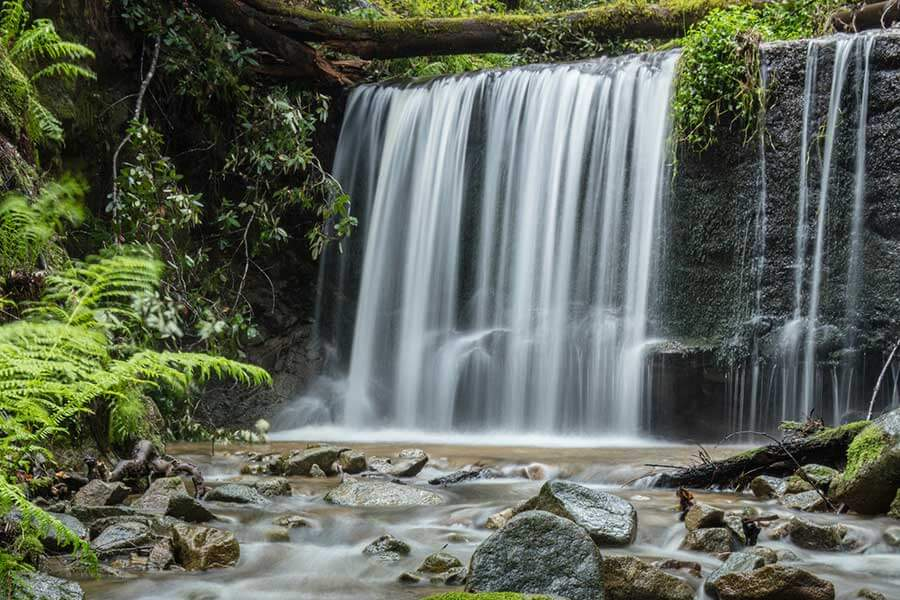 San Vicente Redwoods Waterfall