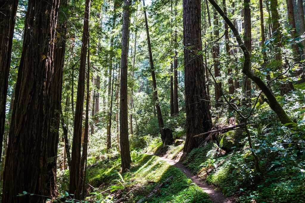 Butano State Park by iStock