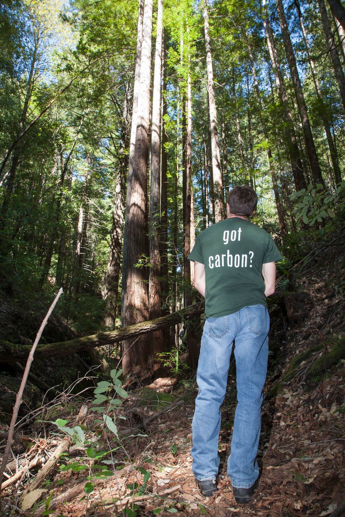 Lompico Forest Carbon Project